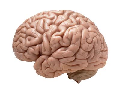 brain-development-supplements