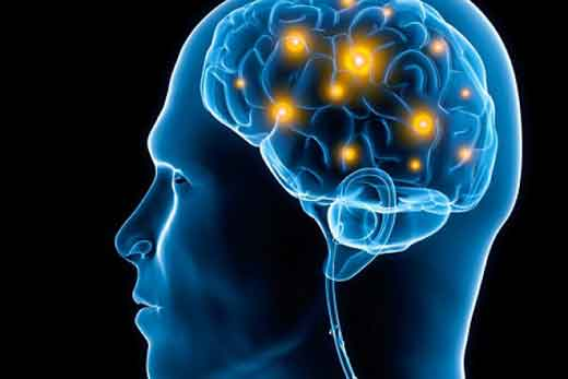human-brain-supplements