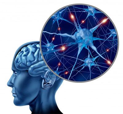 Citicoline-brain